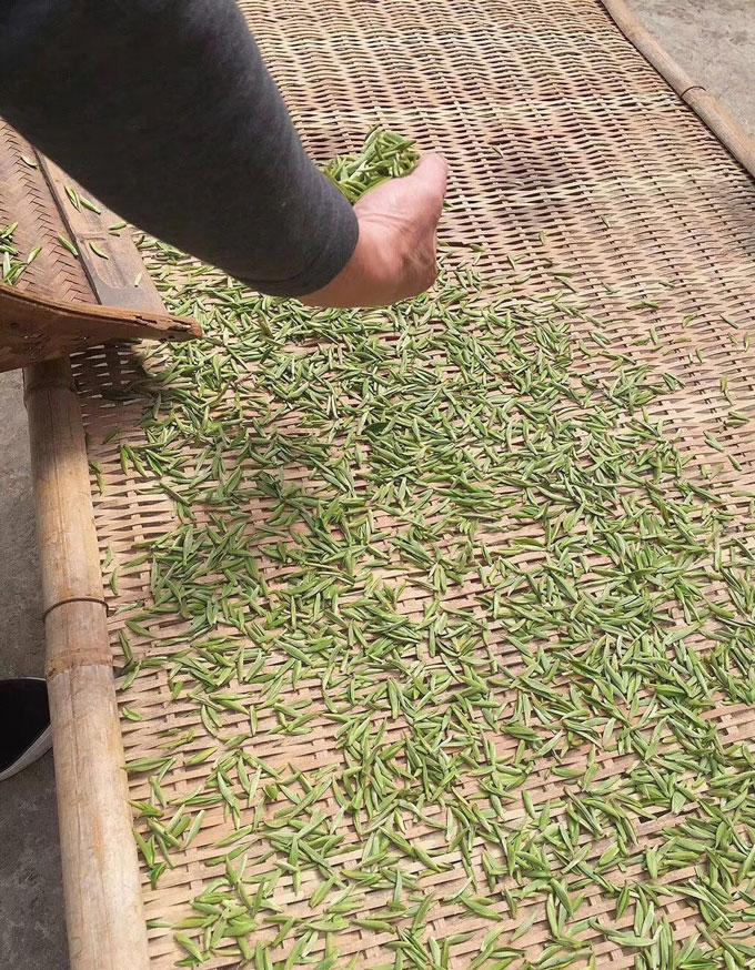 白茶加工流程